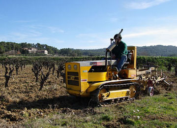 Saint Chamond tractor in vines